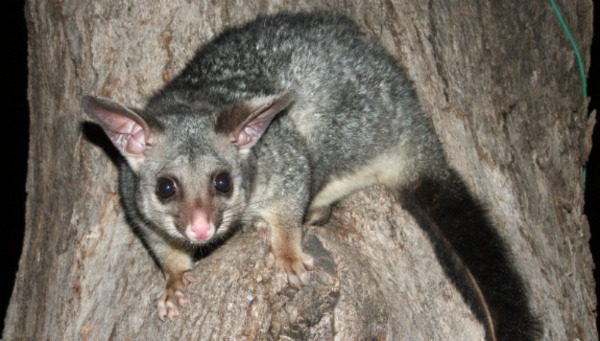 To save Australia's mammals we need a change of heart