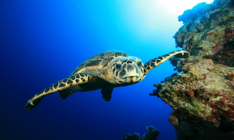 RichCarey_turtles_shutterstock