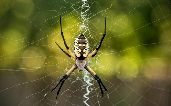 WATCH: Spiders use music to find dinner and love