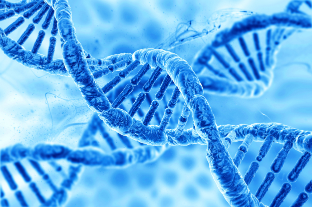New Study Suggests Only 8.2% of Our DNA Is Functional
