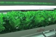 Empty Japanese factories converted into high-tech farms